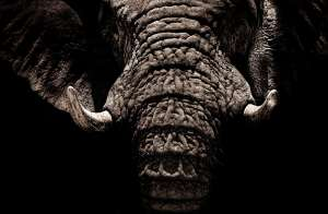 Buying a Veterinary Practice? Beware the elephant in the room...